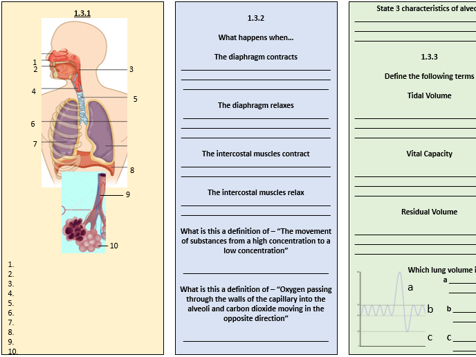 GCSE PE Revision: Respiratory System