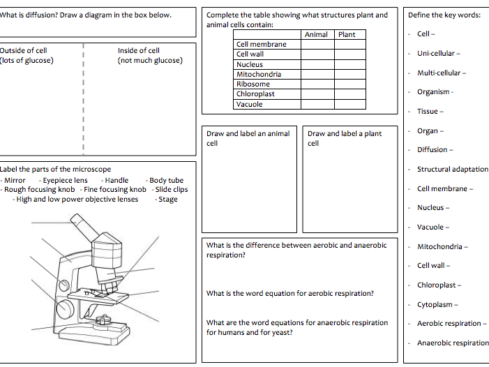"KS3 Revision mats for ""cells and respiration"" and ""humans as organisms"""