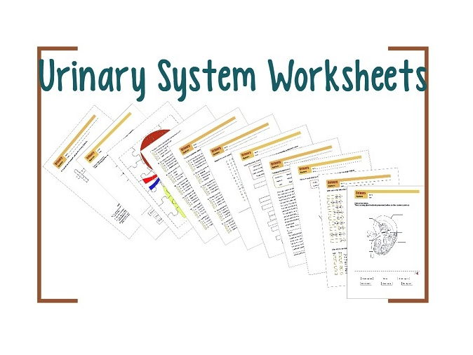 Urinary System Worksheet 1 By Biogeoscience Teaching Resources Tes