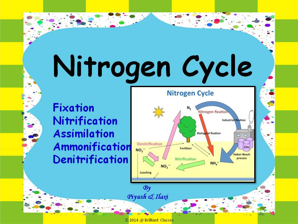 Nitrogen Cycle and Human Impact- A Unit