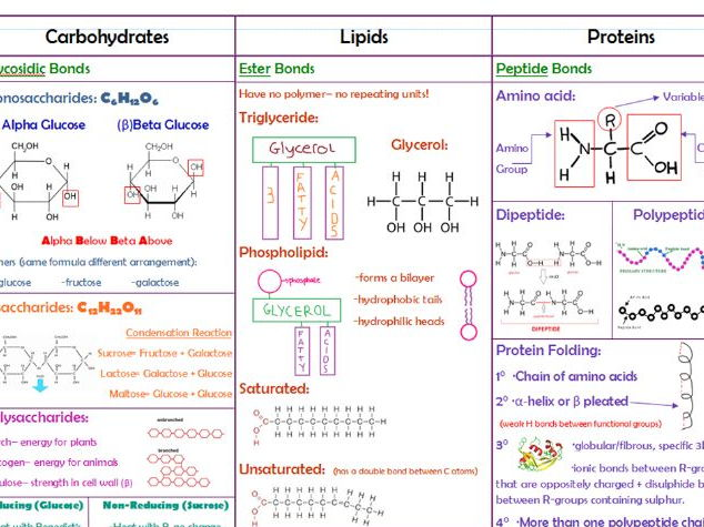 Carbohydrates Lipids Proteins By Timl68 Teaching Resources Tes