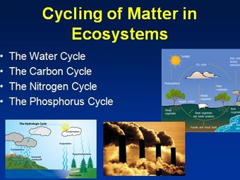 The water cycle the carbon cycle the nitrogen cycle and the cover image ccuart Image collections