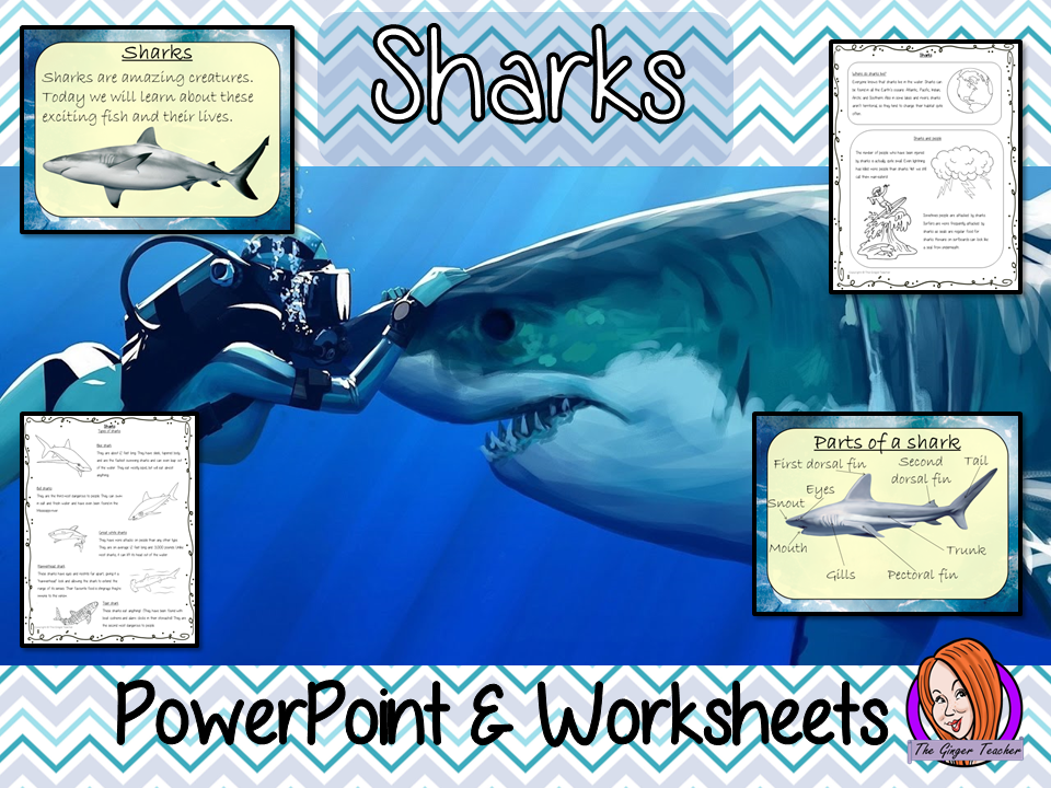 Sharks PowerPoint and Worksheets