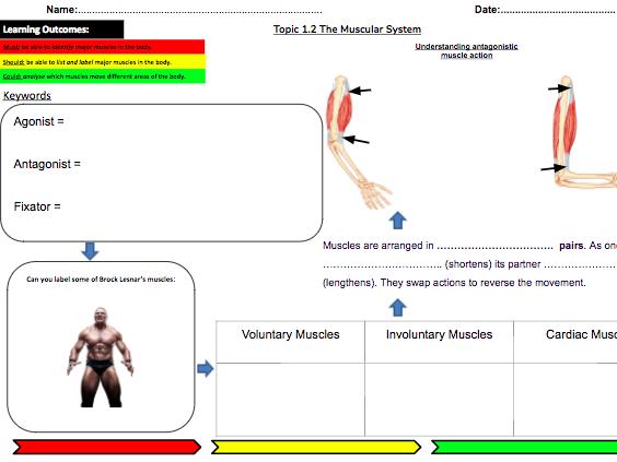 Muscular System Learning Mat & Homework: 1.1b: OCR GCSE PE (2016)