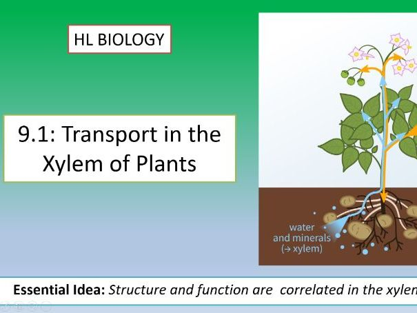 IB Biology HL Unit 9.1: Transport In Xylems of Plants