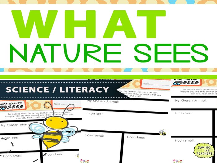 What Nature Sees - Outdoor Diary Writing / Habitats Activity