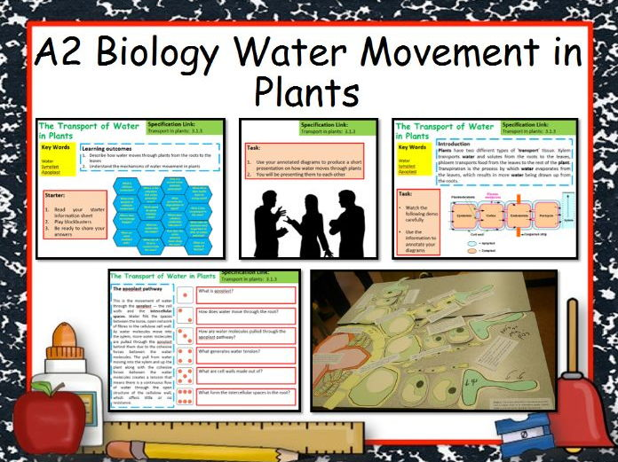 water movement in plants 2017-6-18 if water is available in the soil and conditions are favourable for transpiration, plants go on depleting  is on the movement of water upwards plants,.