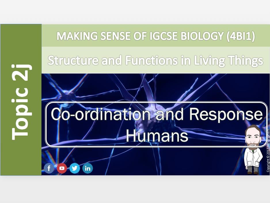 IGCSE Biology 9-1 - 2j Coordination and Response - Humans