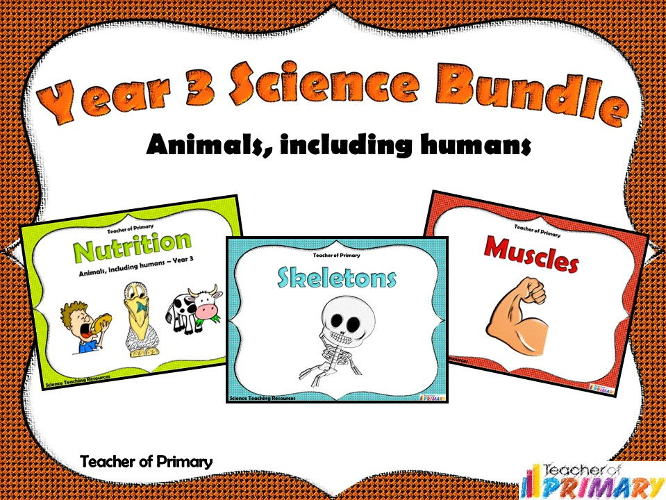 Year 3 Science Bundle - Animals, including humans
