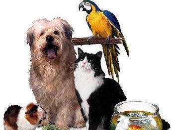 Les animaux domestiques - Pets