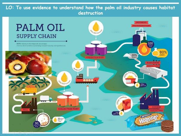 Endangered Species- Palm Oil Issues