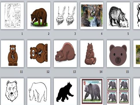 Grizzly Bear Clip Art and Templates