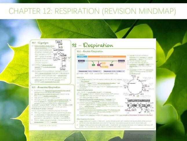 AQA A-Level - Biology : 12 - Respiration (Revision Mindmap)