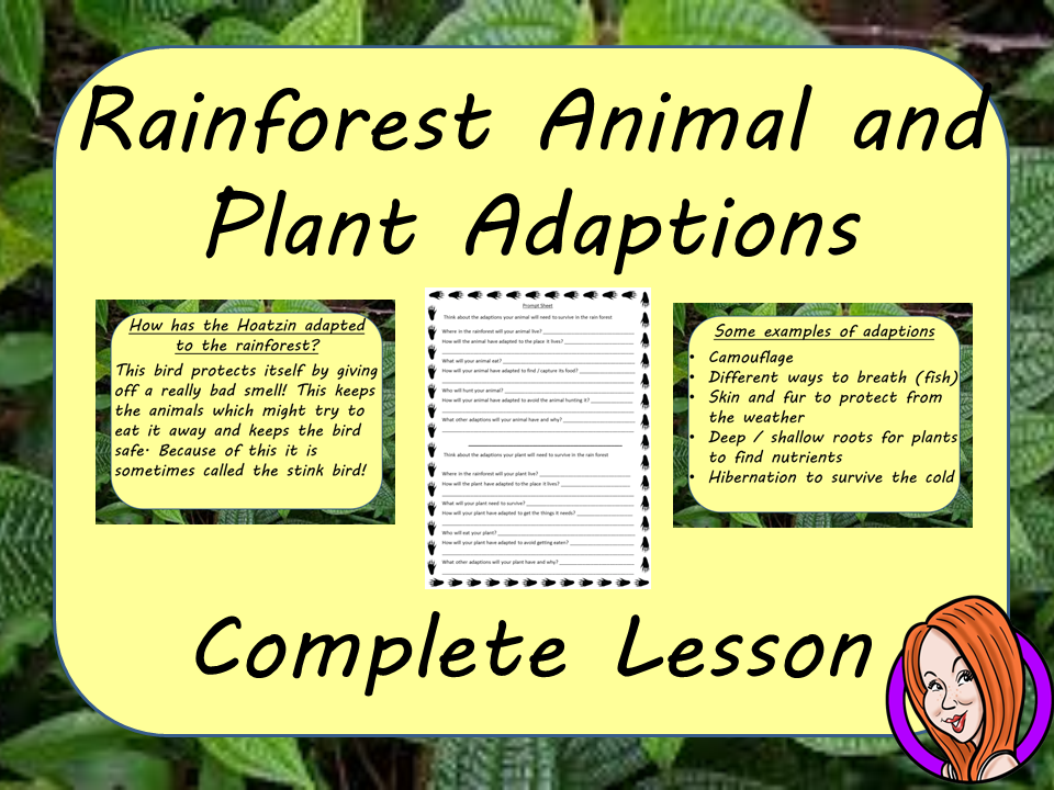 Rainforest Animal and Plant Adaptions  -  Complete STEAM Lesson