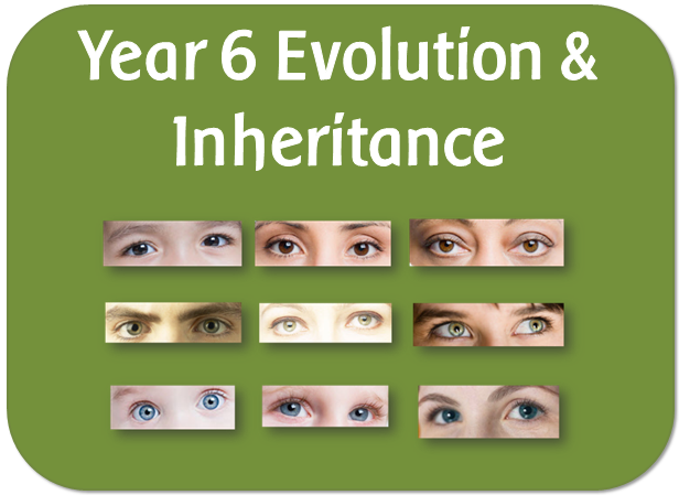 Year 6 Science KS2 Evolution and Inheritance  topic pack : powerpoint lessons