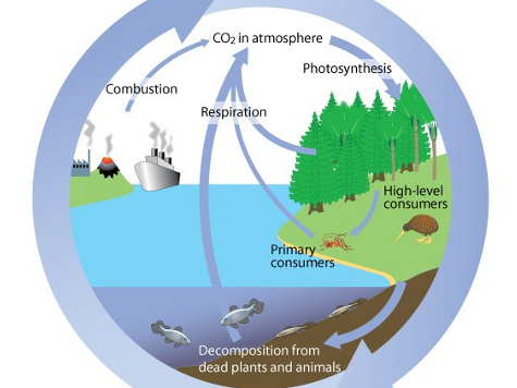 A level; Water and carbon cycle changes over time and managenment.