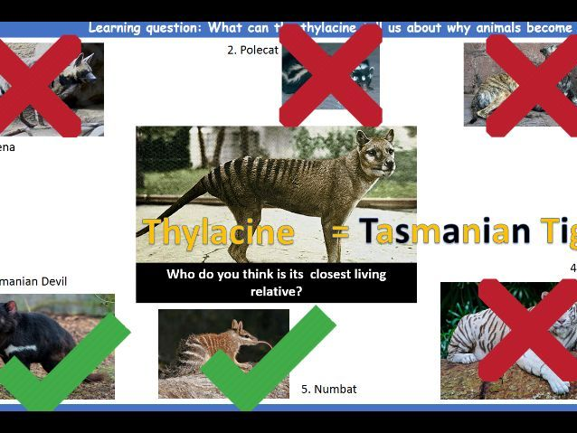 What do we know about endangered animals