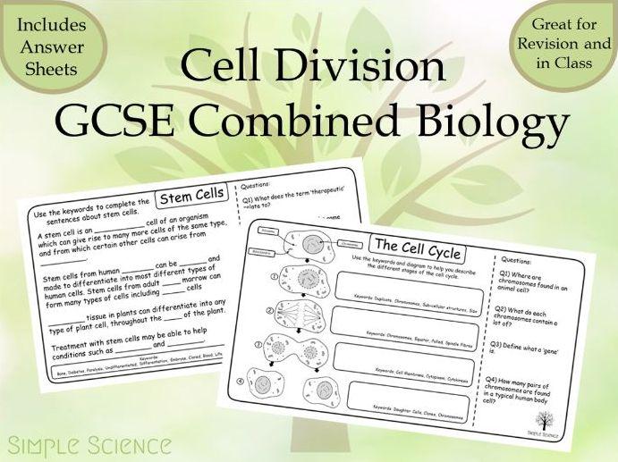 GCSE Biology - Cell Division and Stem Cells Worksheets