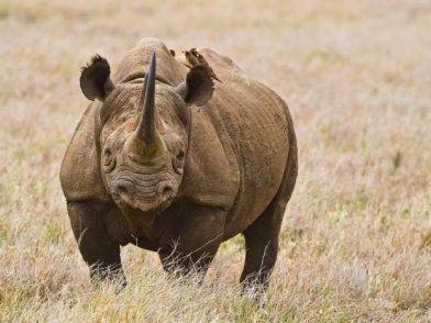 Bioinformatics - Wildlife Forensics
