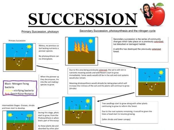 Succession Flow Diagram