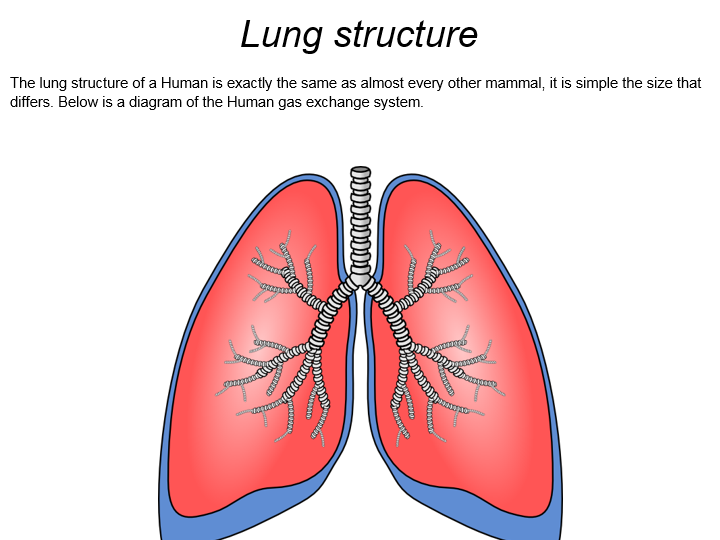 AQA A Level Biology: Lungs