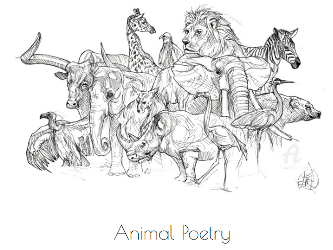 Y7 Animal Poetry Scheme of Work