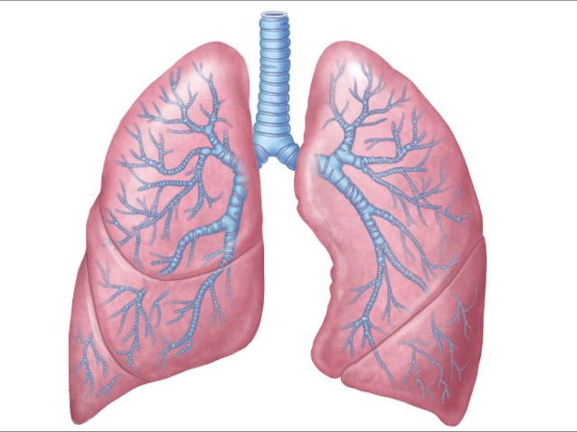 The Respiratory System By Betaeducation