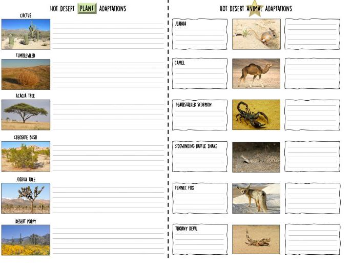 Hot desert plant and animal adaptations lesson and worksheets