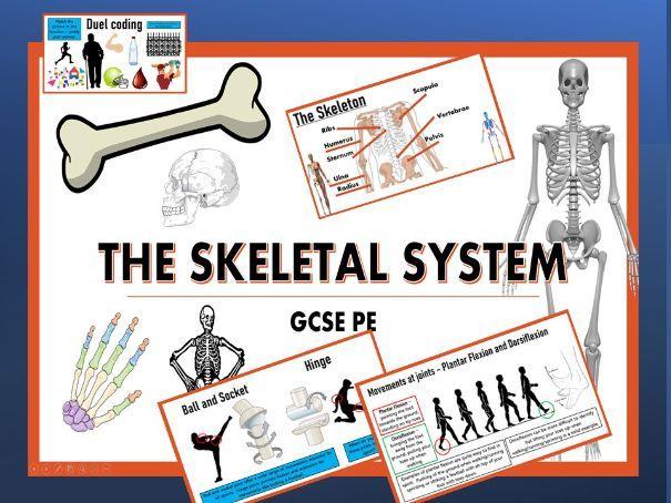 The Skeletal System - GCSE PE