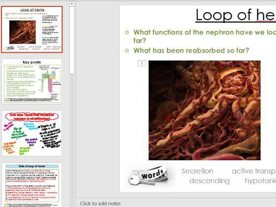OCR A, Alevel Biology, Excretion, Loop of henle Kidney lesson, Osmoregulation