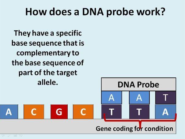 DNA Probes (A2)