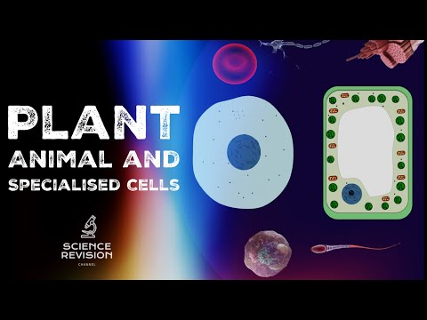GCSE Science Biology (9-1)  - Plant and Animal Cells  - Cell Specialisation