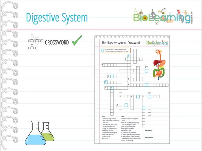 Digestive system - Crossword puzzle (KS3/KS4)