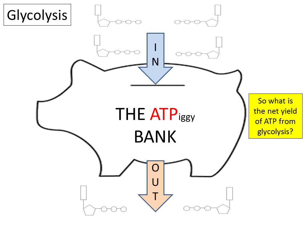 AQA A-level Biology Unit 3.5.2