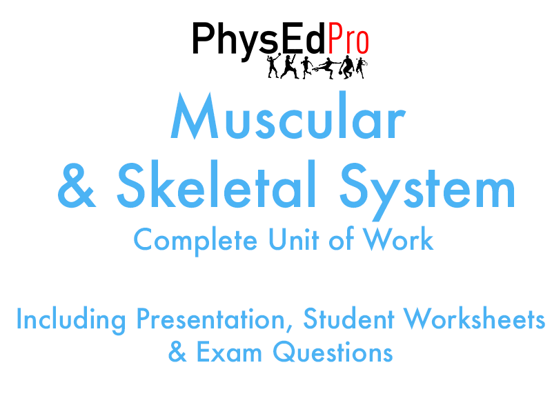 GCSE PE – Skeletal and Muscular system-  Unit of Work - Worksheet, Powerpoint, Exam Questions  IGCSE