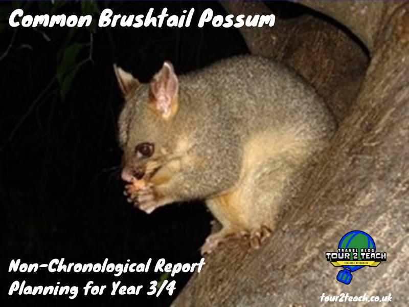 Common Brushtail Possum: Non-Chronological Report Planning for Year 3/4