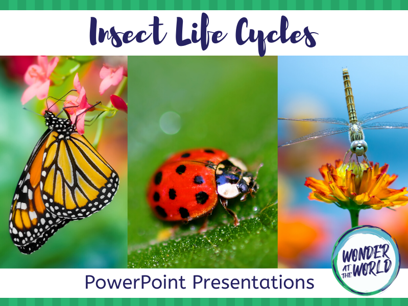 Insect Life Cycle PowerPoints KS2
