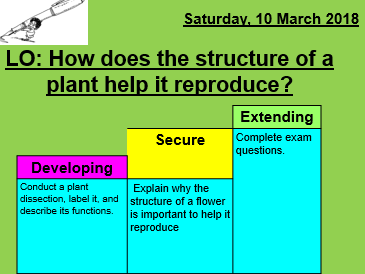 Plant reproduction and pollination lesson