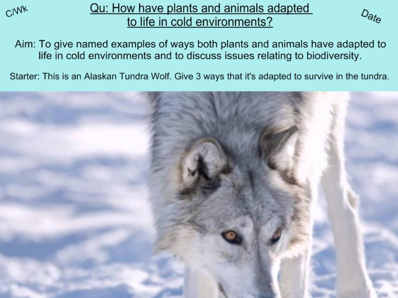 Adaptation in Cold Environments