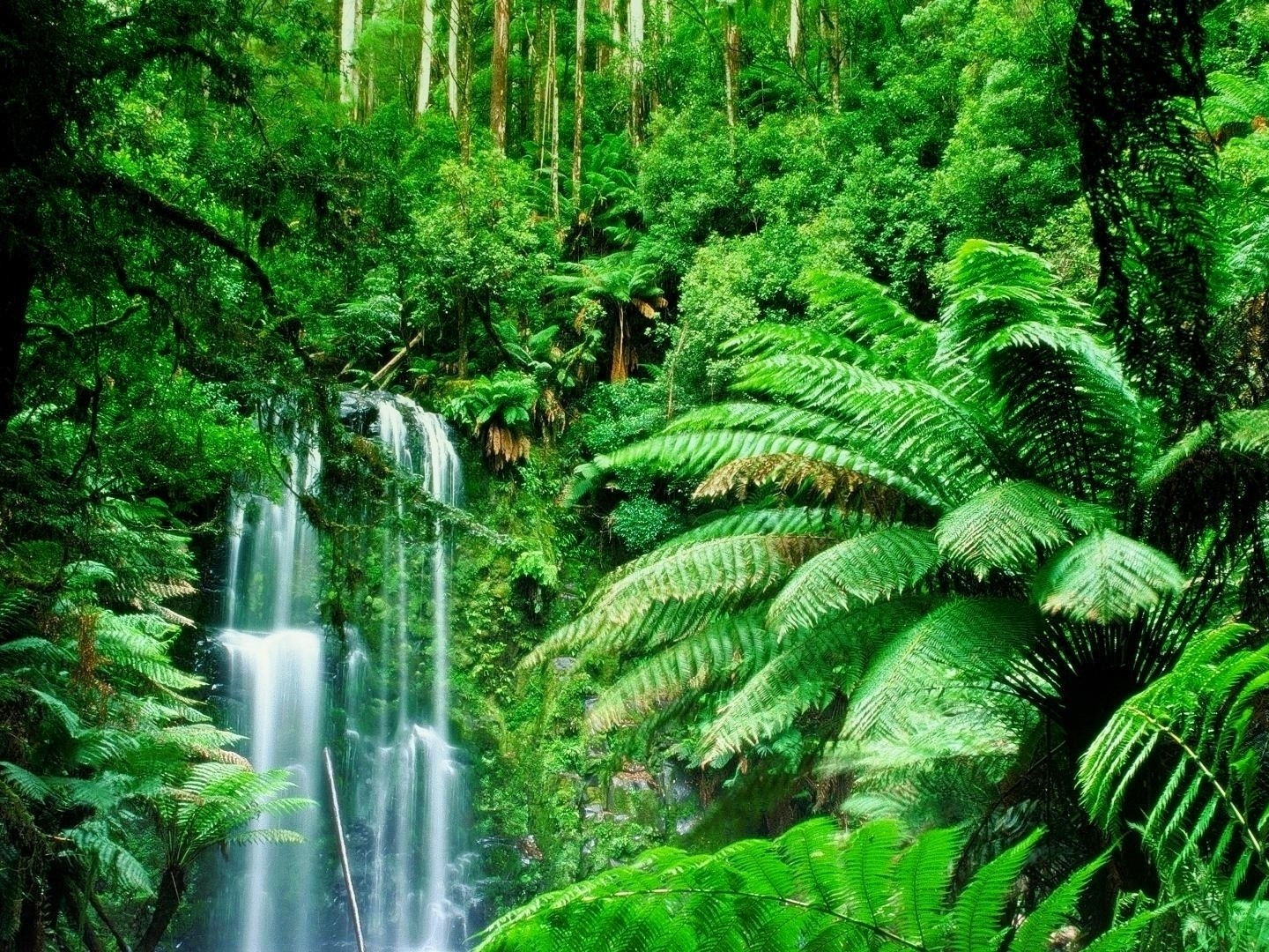 Week 2 of 6 week unit of English planning for Year 3 or 4- The Rainforest