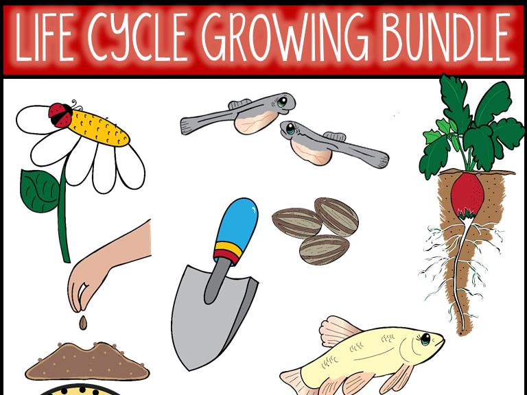 Life Cycle Bundle Clip Art