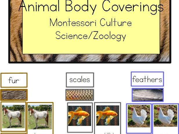 Animal Body Coverings - Montessori Zoology