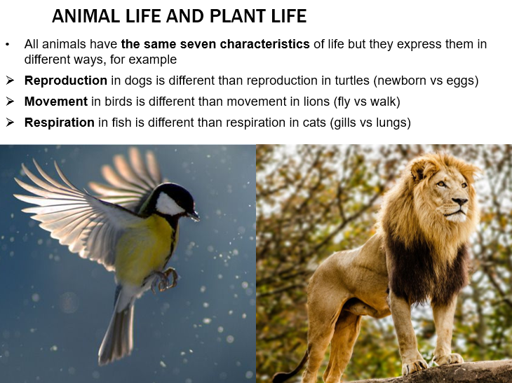 KS3- The characteristics of living things & activities
