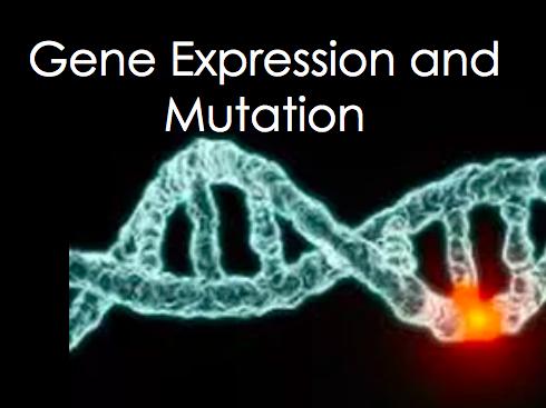 Gene Expression and Mutation
