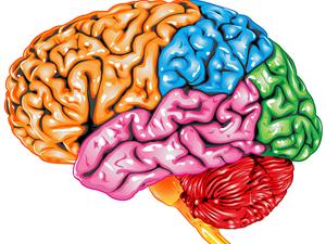 GCSE PSYCHOLOGY AQA - Social Influence