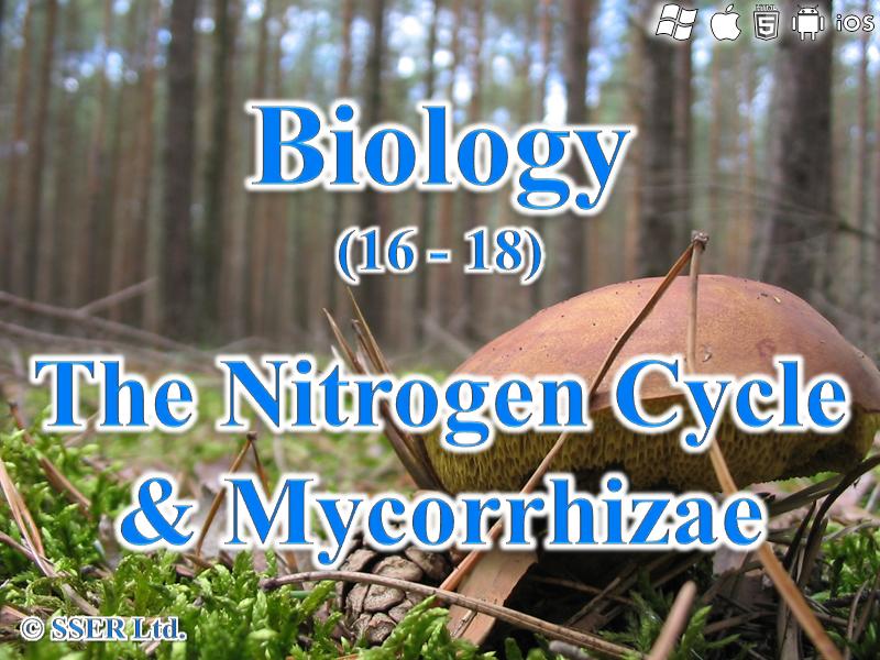 3.5.4 The Nitrogen Cycle and Mycorrhizae