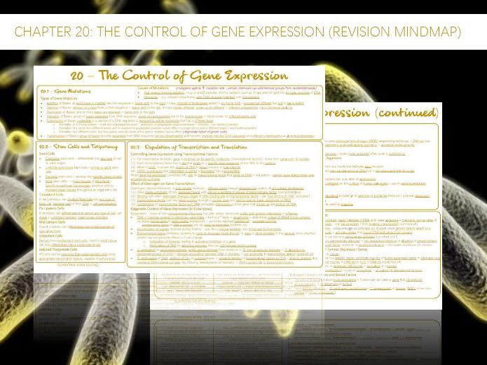 AQA A-Level - Biology : 20 - The Control of Gene Expression (Revision Mindmap)
