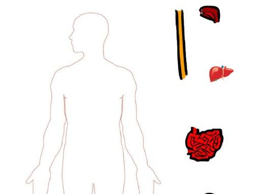 KS2 Digestive System Cut and Stick