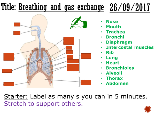 breathing and gas exchange complete lesson gcse 1 9 by matt nick1in teaching resources tes. Black Bedroom Furniture Sets. Home Design Ideas