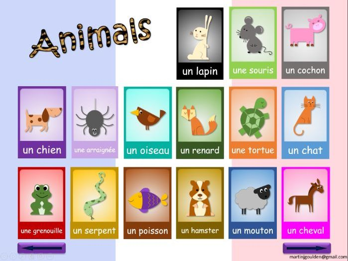 French - Interactive Whiteboard activity: Animal Names